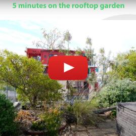 Christie Walk rooftop garden mini-video tour